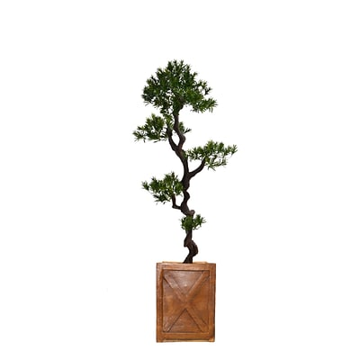 Laura Ashley 57 Tall Yacca Tree in Planter (VHX122207)