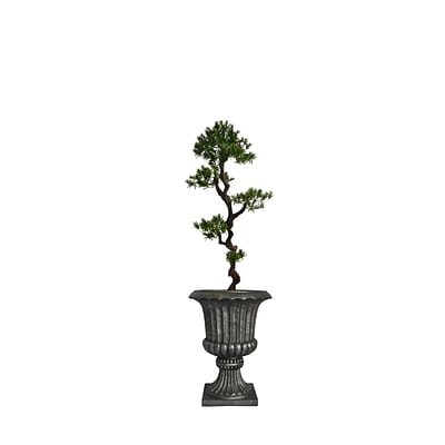 Laura Ashley 62 Tall Yacca Tree in Planter (VHX122208)