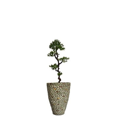 Laura Ashley 62 Tall Yacca Tree in Planter (VHX122209)