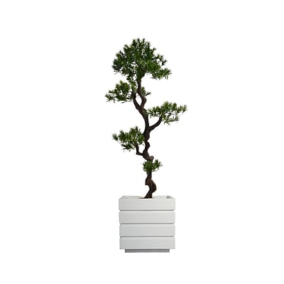 Laura Ashley 54 Tall Yacca Tree in Planter (VHX122211)