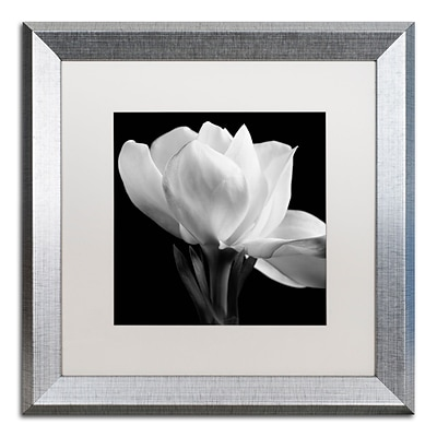 Trademark Fine Art Gardenia by Michael Harrison 16 x 16 White Matted Silver Frame (ALI0287-S1616MF)
