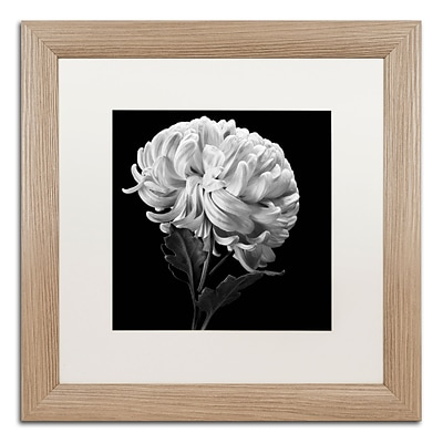 Trademark Fine Art Mum II by Michael Harrison 16 x 16 White Matted Wood Frame (ALI0292-T1616MF)