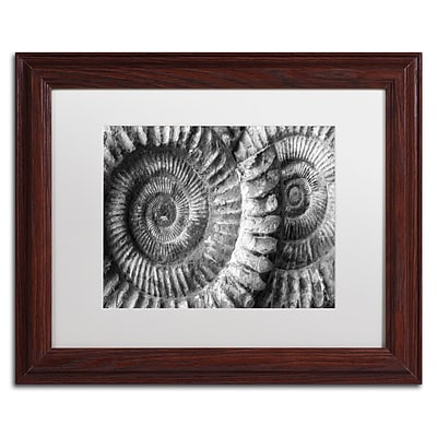 Trademark Fine Art Amonita 3 by Moises Levy 11 x 14 White Matted Wood Frame (ALI1052-W1114MF)