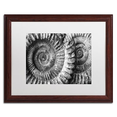 Trademark Fine Art Amonita 3 by Moises Levy 16 x 20 White Matted Wood Frame (ALI1052-W1620MF)