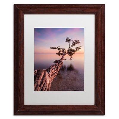 Trademark Fine Art Water Tree IV by Moises Levy 11 x 14 White Matted Wood Frame (ALI1066-W1114MF)