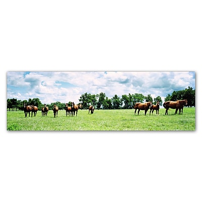 Trademark Fine Art Kentucky Horse 5 by Preston 16 x 47 Canvas Art (EM0534-C1647GG)