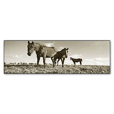 Trademark Fine Art Kentucky Horses by Preston 16 x 47 Canvas Art (EM0539-C1647GG)