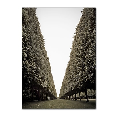 Trademark Fine Art Parisian Versailles Trees by Preston 24 x 32 Canvas Art (EM0563-C2432GG)