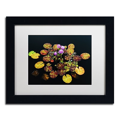 Trademark Fine Art Exotic Lilies by Kurt Shaffer 11 x 14 White Matted Black Frame (KS01084-B1114MF)