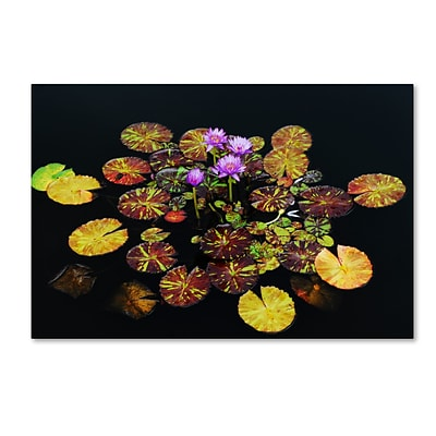 Trademark Fine Art Exotic Lilies by Kurt Shaffer 12 x 19 Canvas Art (KS01084-C1219GG)