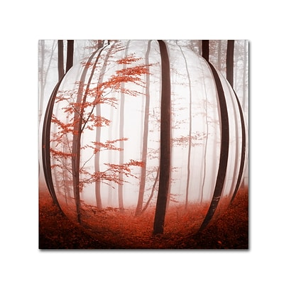 Trademark Fine Art Autumn to Burn by Philippe Sainte-Laudy 24 x 24 Canvas Art (PSL0420-C2424GG)