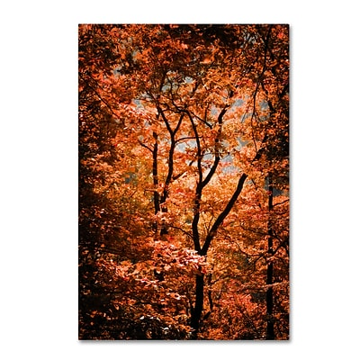 Trademark Fine Art Autumn Whispers by Philippe Sainte-Laudy 16 x 24 Canvas Art (PSL0421-C1624GG)