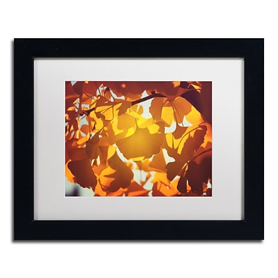 Trademark Fine Art Ginkgo Leaves by Philippe Sainte-Laudy 11 x 14 White Matted Black Frame (PSL0433-B1114MF)