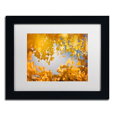 Trademark Fine Art Ginkgophytes by Philippe Sainte-Laudy 11 x 14 White Matted Black Frame (PSL0434-B1114MF)