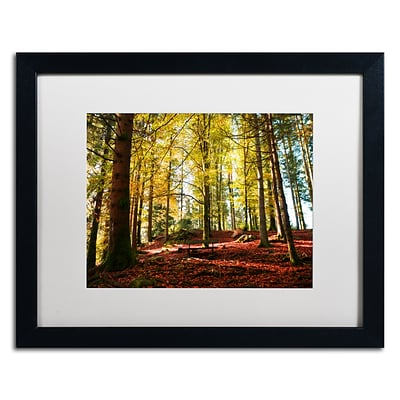 Trademark Fine Art The Autumn Bench by Philippe Sainte-Laudy 16 x 20 White Matted Black Frame (PSL0451-B1620MF)