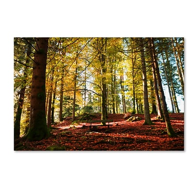 Trademark Fine Art The Autumn Bench by Philippe Sainte-Laudy 22 x 32 Canvas Art (PSL0451-C2232GG)