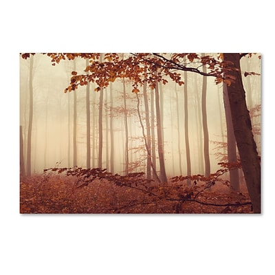 Trademark Fine Art The Last of Fall by Philippe Sainte-Laudy 22 x 32 Canvas Art (PSL0453-C2232GG)