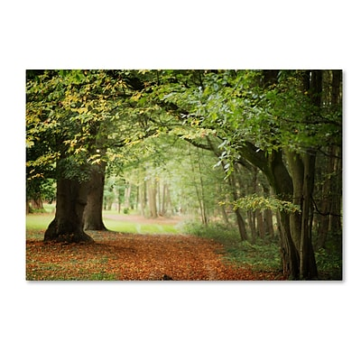 Trademark Fine Art Through the Woods by Philippe Sainte-Laudy 22 x 32 Canvas Art (PSL0456-C2232GG)