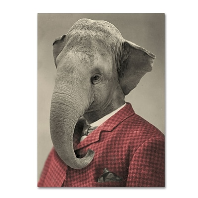 Trademark Fine Art Wild Animals #1 by J Hovenstine Studios 14 x 19 Canvas Art (ALI1355-C1419GG)