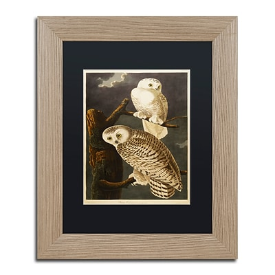 Trademark Fine Art Snowy Owl by John James Audubon 11 x 14 Black Matted Wood Frame (886511840881)