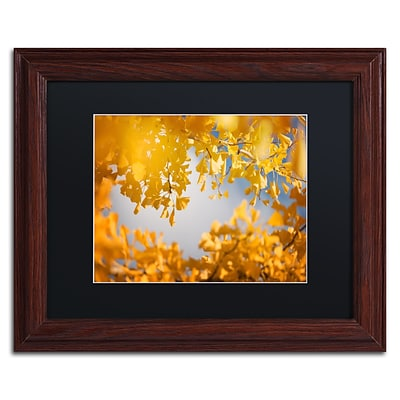 Trademark Fine Art Ginkgophytes by Philippe Sainte-Laudy 11 x 14 Black Matted Wood Frame (886511797345)