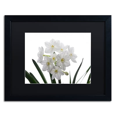 Trademark Fine Art Paper White Bouquet by Kurt Shaffer 16 x 20 Black Matted Black Frame (886511821767)