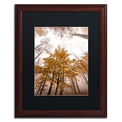 Trademark Fine Art Foggy Days by Philippe Sainte-Laudy 16 x 20 Black Matted Wood Frame (886511796751)