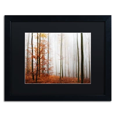 Trademark Fine Art Forest Corner by Philippe Sainte-Laudy 16 x 20 Black Matted Black Frame (886511796782)