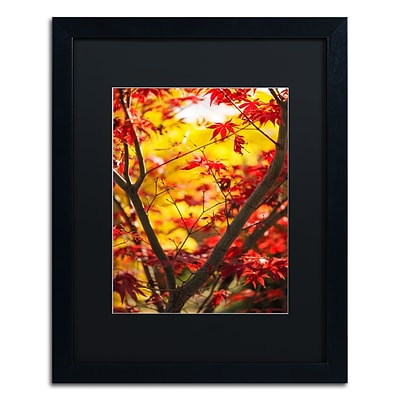 Trademark Fine Art Morning Jive by Philippe Sainte-Laudy 16 x 20 Black Matted Black Frame (886511797789)