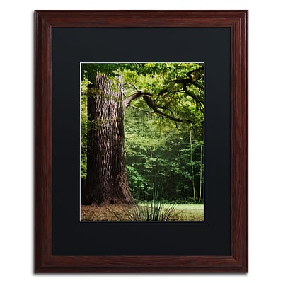 Trademark Fine Art The old Trunk by Philippe Sainte-Laudy 16 x 20 Black Matted Wood Frame (886511799356)