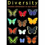 Diversity creates dimension… Poster