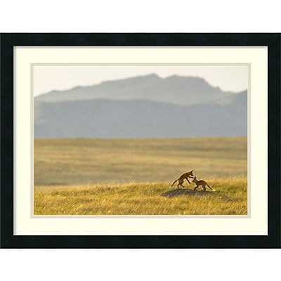 Jason Savage Montana Fox Kits Framed Art Print 26 x 20 DSW2972166)