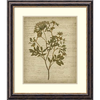 Jennifer Goldberger Romantic Pressed Flowers IV Framed Art Print 26 x 30 (DSW1421316)