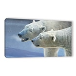 ArtWall Brothers Polar Bears by Chris Vest Painting Print on Wrapped Canvas; 12 H x 24 W x 2 D