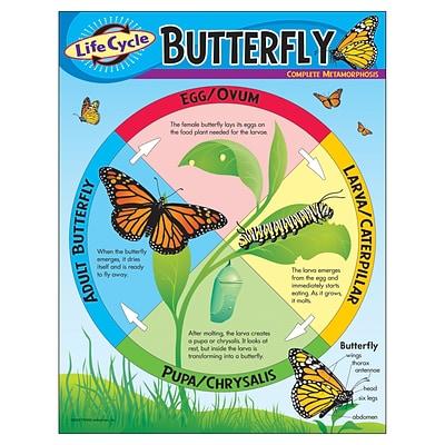 Life Cycle of a Butterfly Learning Chart