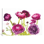 Ebern Designs Spring Ranunculus III Graphic Art on Wrapped Canvas; 8 H x 12 W x 0.75 D