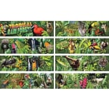 Tropical Rain Forest Bulletin Board Set