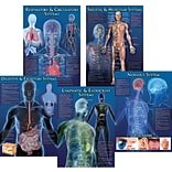 Human Body Facts Bulletin Board Set