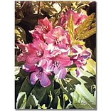 Trademark Global David Lloyd Glover Royal Rhododendrons Canvas Art, 35 x 47