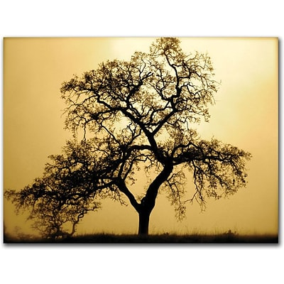Trademark Global Colleen Proppe Pacific Oak Canvas Art, 14 x 19