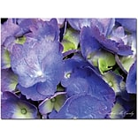 Trademark Global Kathie McCurdy Hydrangea Canvas Art, 14 x 19