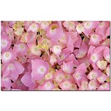 Trademark Global Kathie McCurdy Pink Hydrangea Canvas Art, 16 x 24