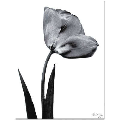 Trademark Global Kathie McCurdy Tulip Canvas Art, 24 x 18