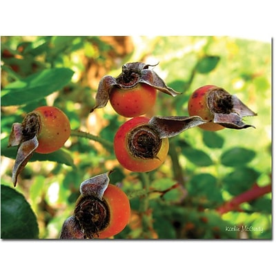 Trademark Global Kathie McCurdy Rose Hips Canvas Art, 24 x 32