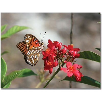 Trademark Global Patty Tuggle Butterfly on Red Flowers Canvas Art, 24 x 32