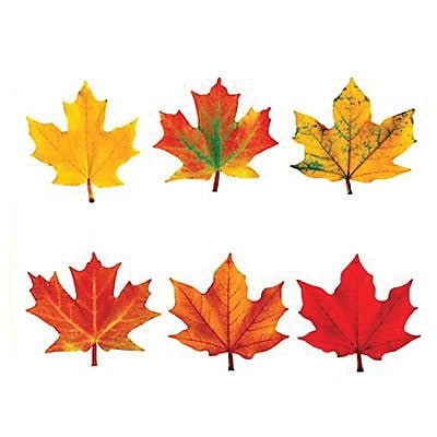 Trend® Classic Accents® Variety Packs, Maple Leaves Discovery