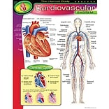 Cardiovascular System Learning Chart