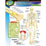 Skeletal System Learning Chart