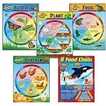 Learning Charts Combo Pack, Life Cycles