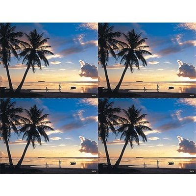 Generic Laser Postcards; Palm Trees & Ocean Scene